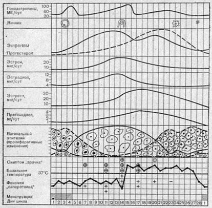 Схема циклических изменений функции эндокринных желез по данным гормональной экскреции с мочой и по тестам...