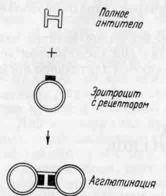 Схема реакции агглютинации