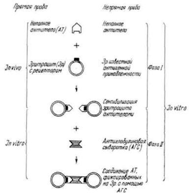 Схема прямой и непрямой проб