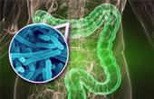 Микрофлора кишечника: ответы на часто задаваемые вопросы