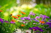 Цветы и здоровье