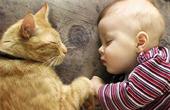 Содержание кошки в доме