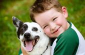 Зачем нужна кастрация и вопросы безопасности хозяев животного
