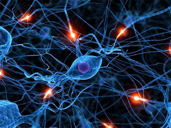 Что из себя представляет моторный нейрон?