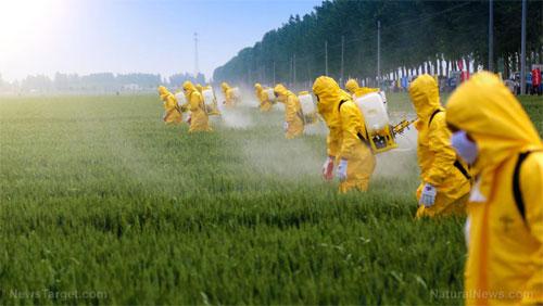 Витамины vs пестициды