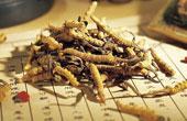 Китайский кордицепс отзывы врачей