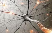 Что нужно знать о нервной системе?