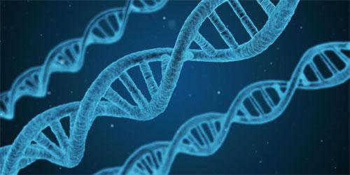 Что может дать генетическое исследование?