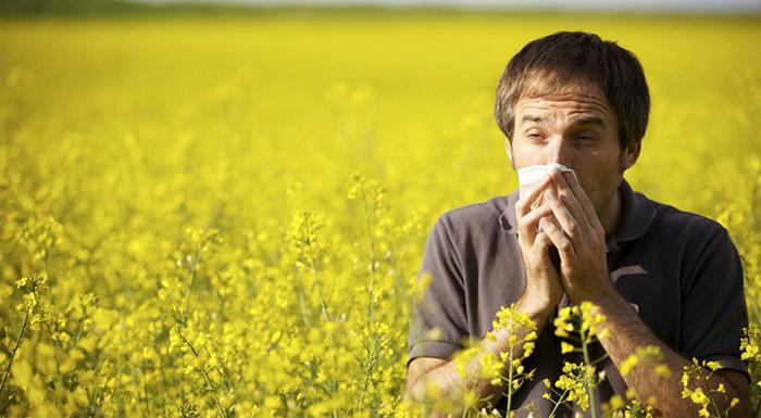 Почему возникает сенная лихорадка?
