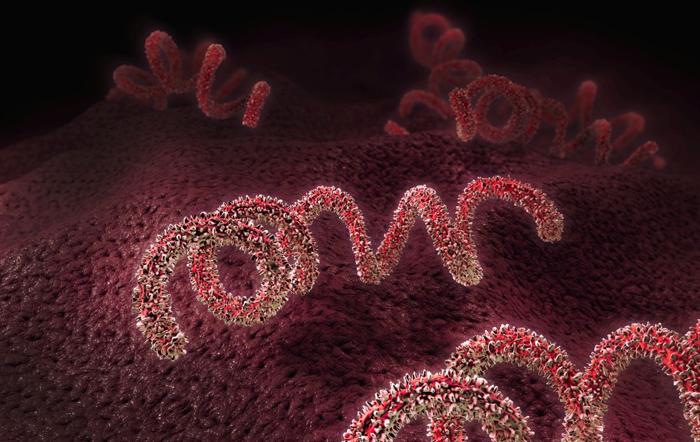 Сифилис меняет свою генетику, чтобы уклониться от иммунной системы