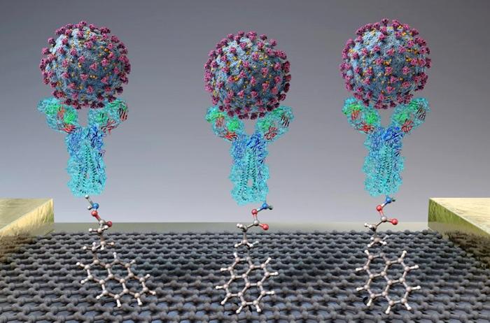 Изобретен диагностический биосенсор, обнаруживающий SARS-CoV-2