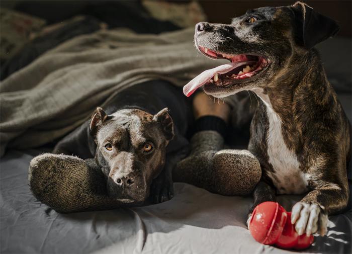 Бешенство: симптомы смертельной болезни у человека и животных